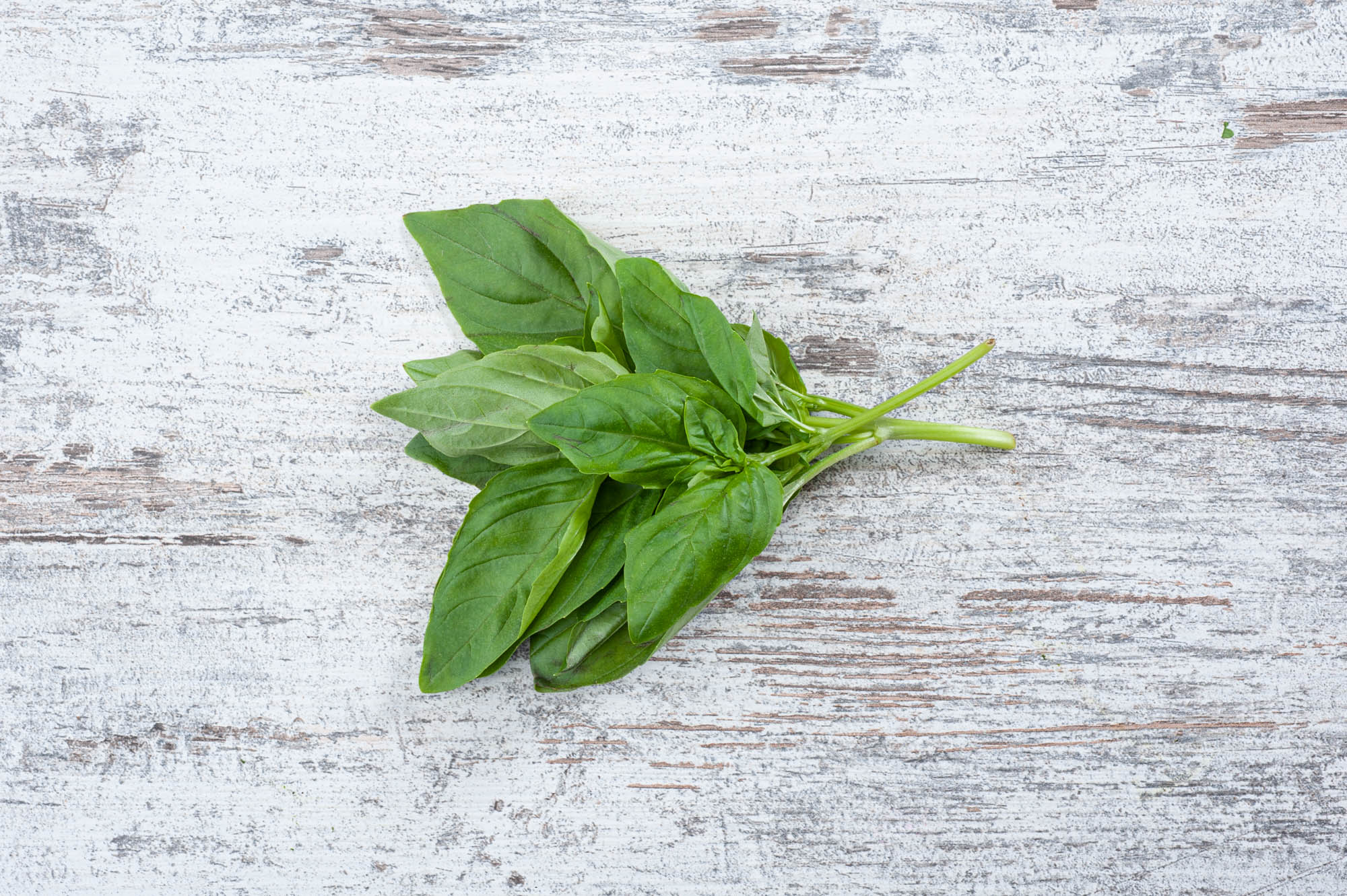 basil fresh herb