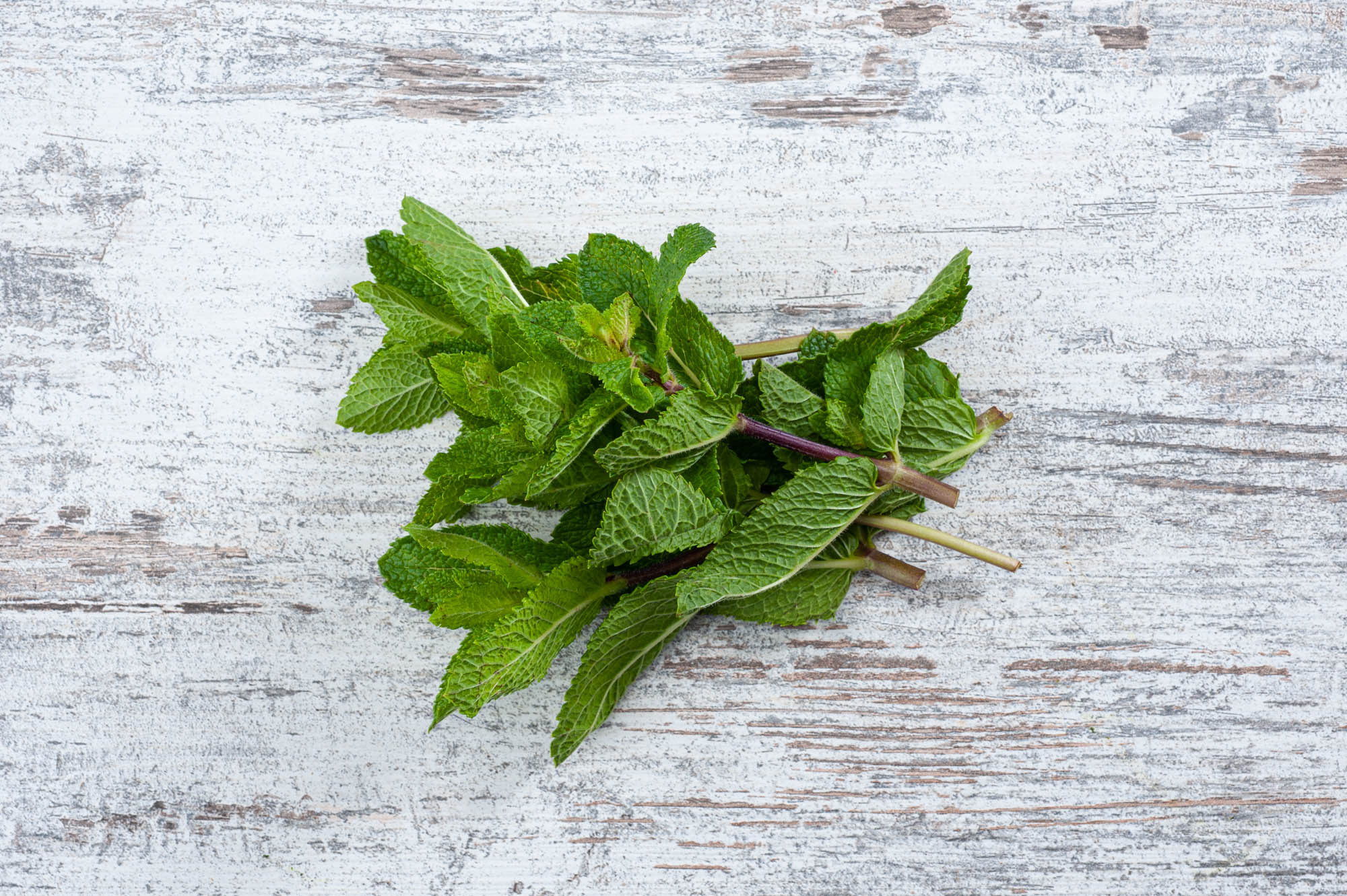 Mint, fresh herb