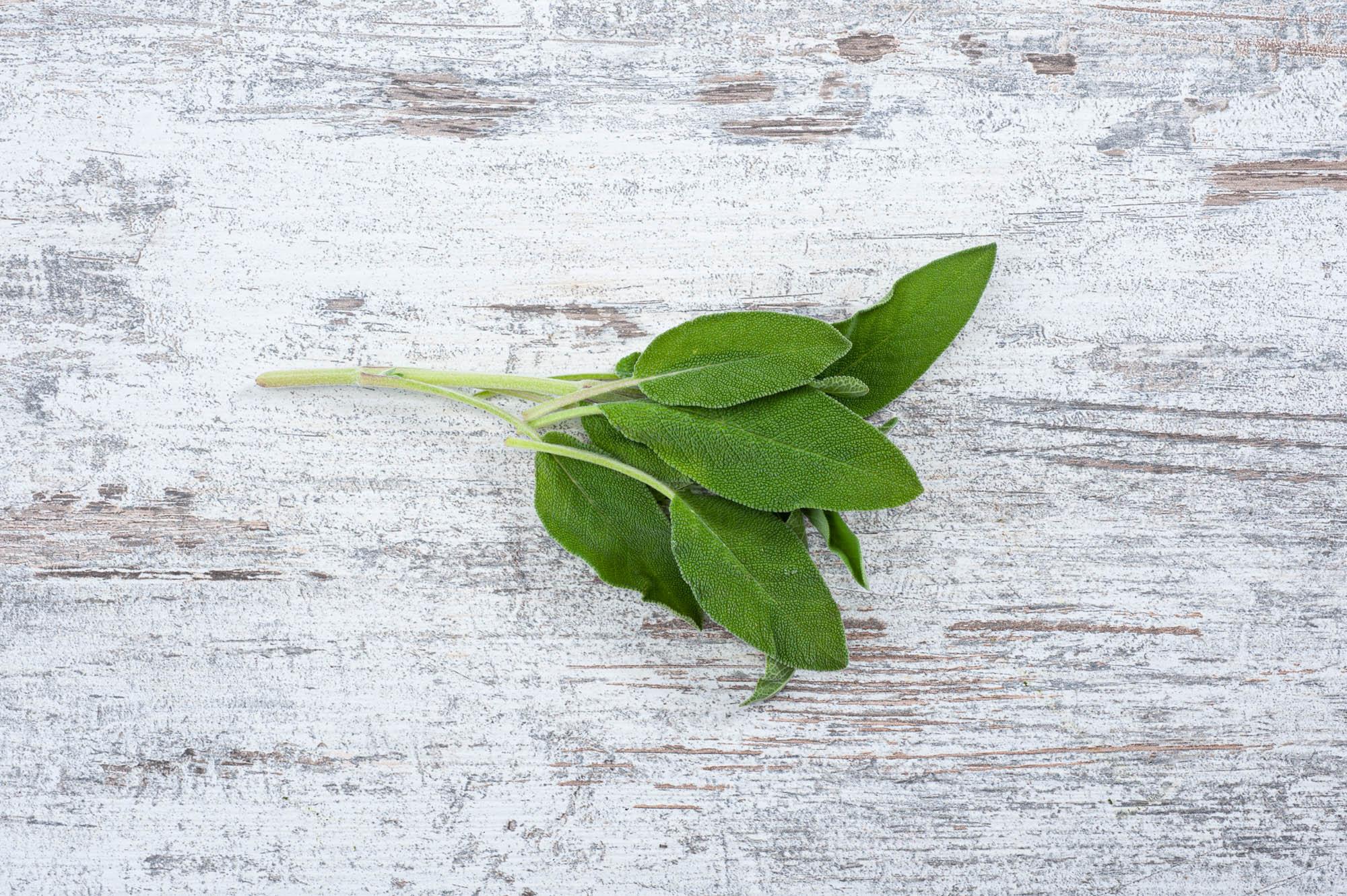sage fresh herbs