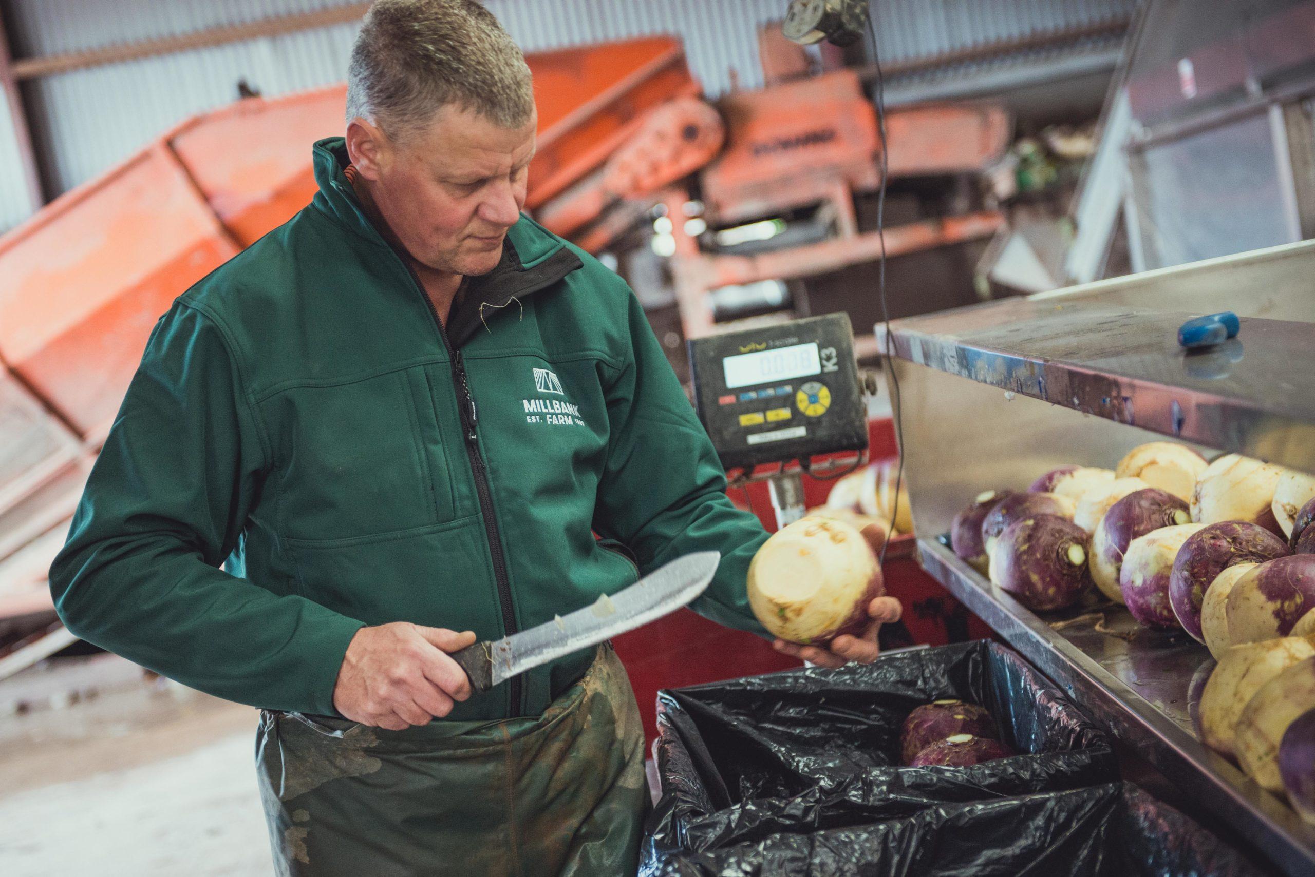 Gavin snedding turnips