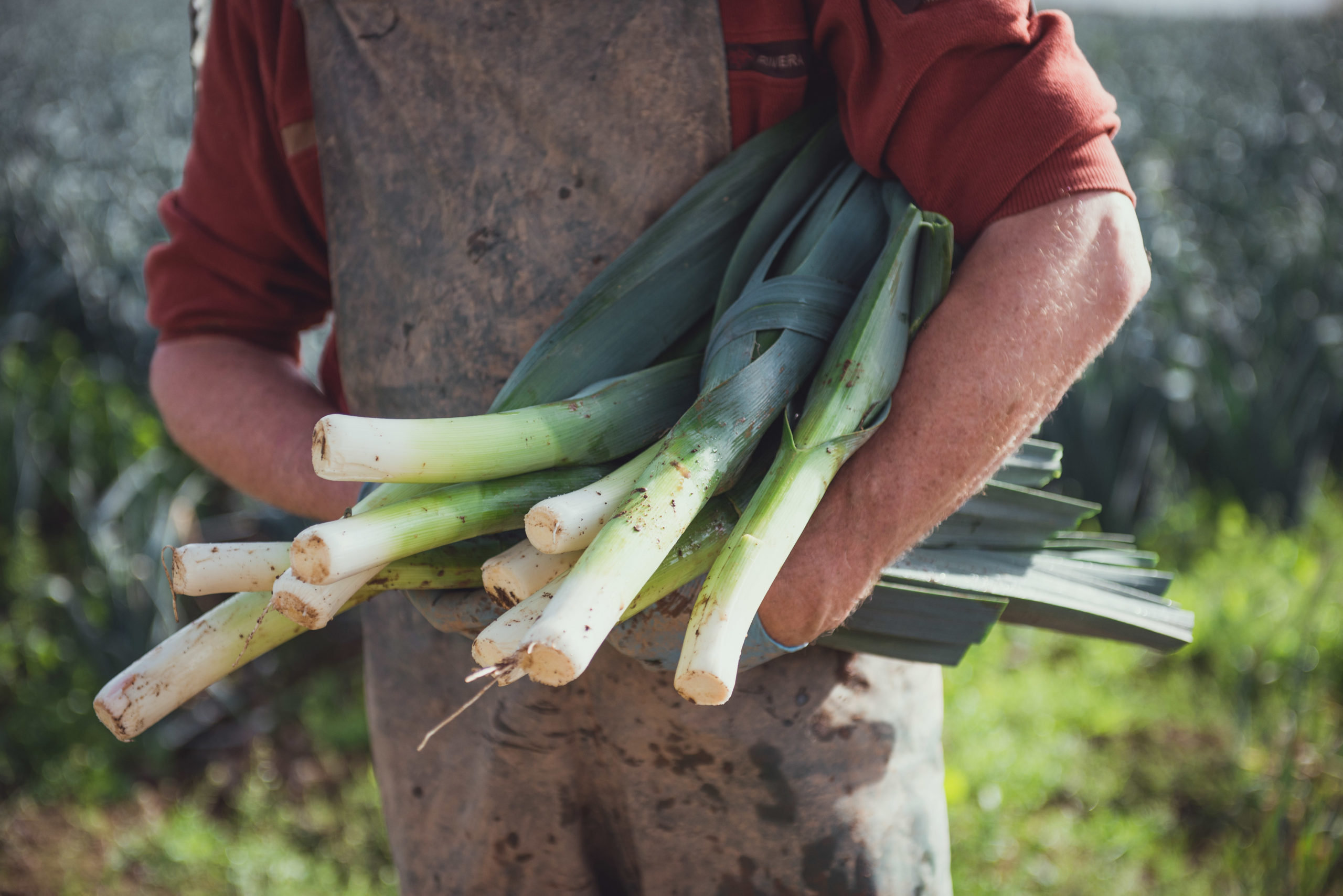 Gavin working in field, snedding leeks
